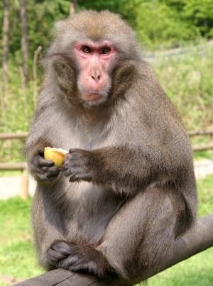monkey madness 2